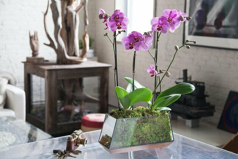 Best Orchid Pots For Phalaenopsis