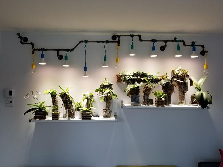 Growing Phalaenopsis Orchids Under Lights