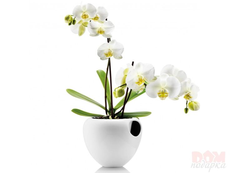 Main Selection Criteria Best Orchid Pots For Phalaenopsis