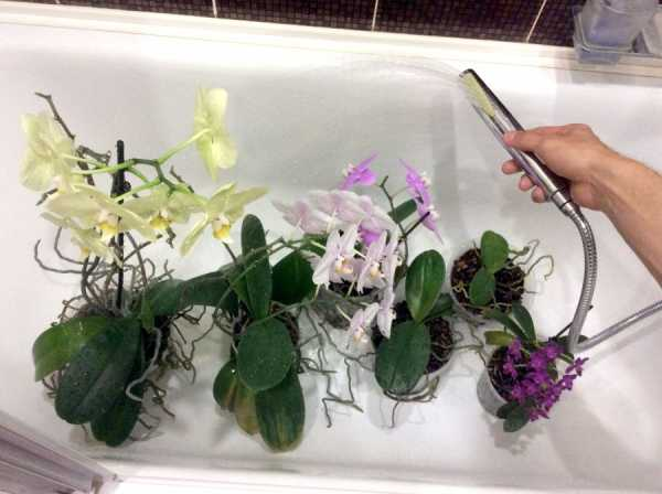 How Do Orchids Get Nutrition