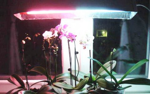 Temperature For Orchids