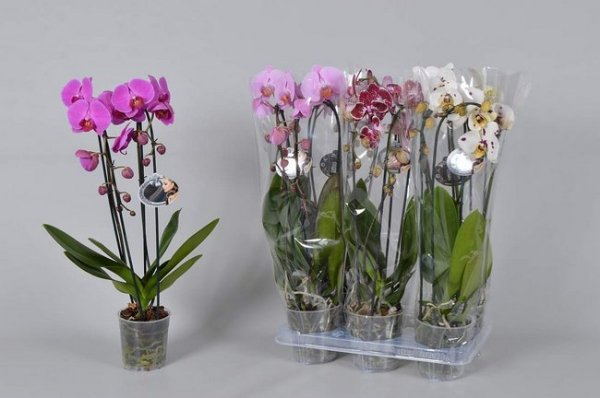 How To Buy Orchids