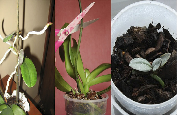 How To Transplant An Orchid Baby