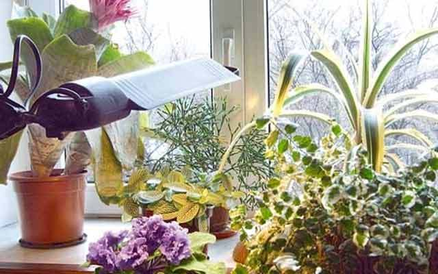 How Do I Protect My Plants From Frost In The Winter