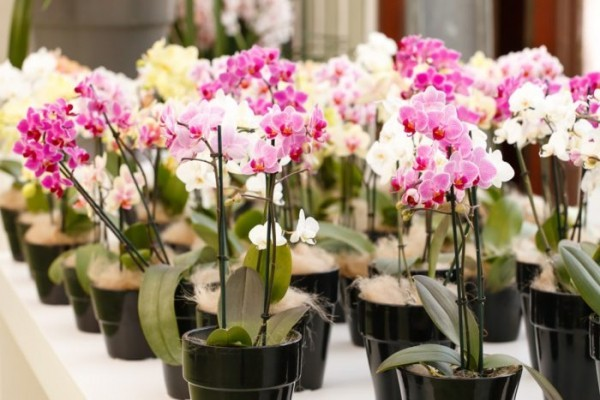How Do You Pick A Good Orchid
