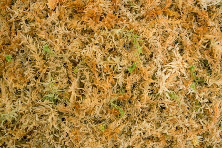 New Zealand Sphagnum Moss For Orchids
