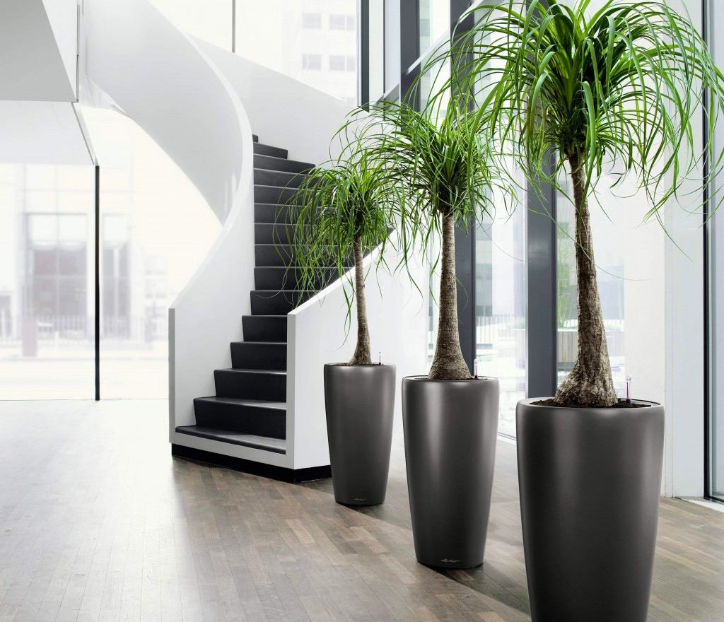 Palm Trees Best Indoor Plant For Beginners
