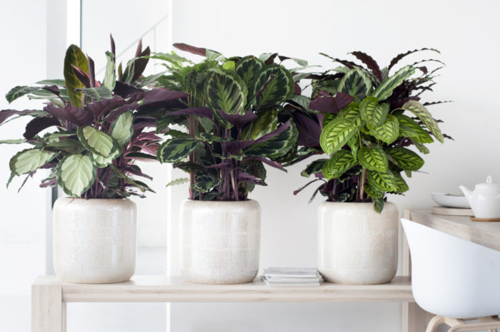 What Are Decorative Large Leaved House Plants