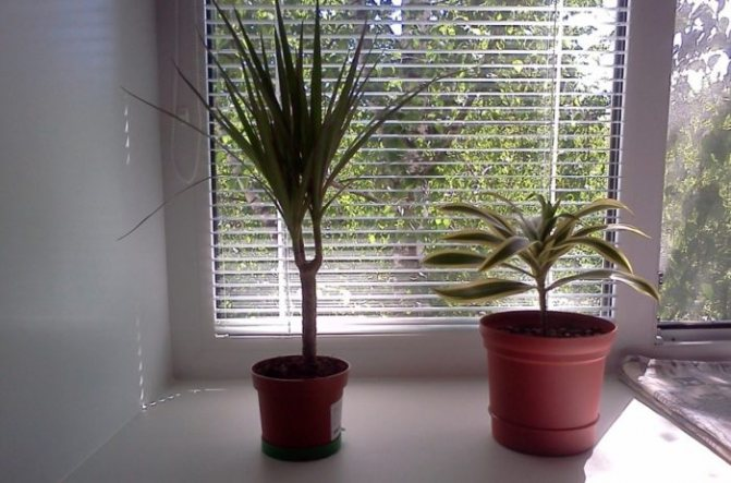 What Direction Window Is Best For Plants