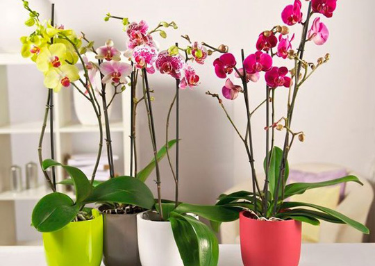 What To Do When Orchids Have Stopped Flowering