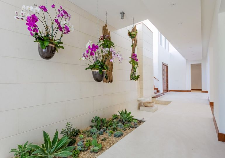Where To Put Orchids In Your Home