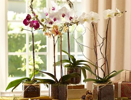 Where Should Orchids Be Placed Indoors