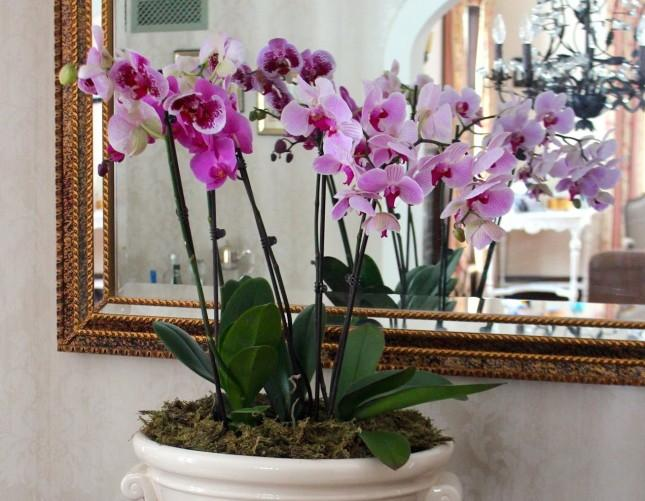 Can I Put Two Orchids In One Pot