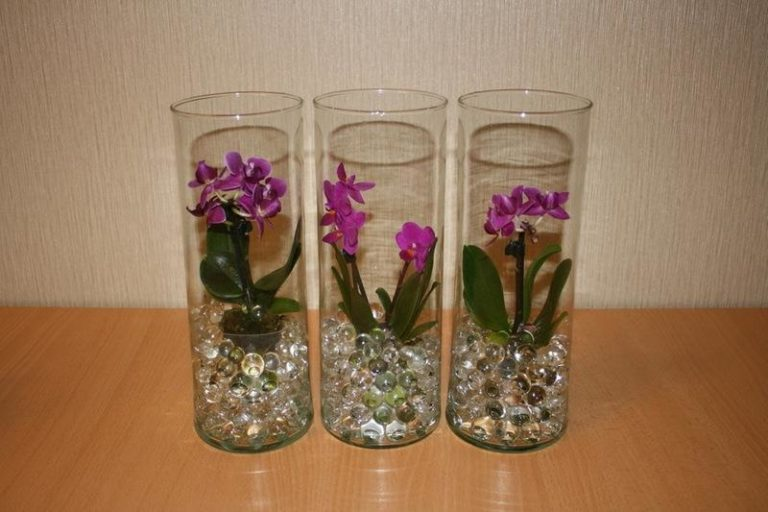 Growing Orchids In Water Beads