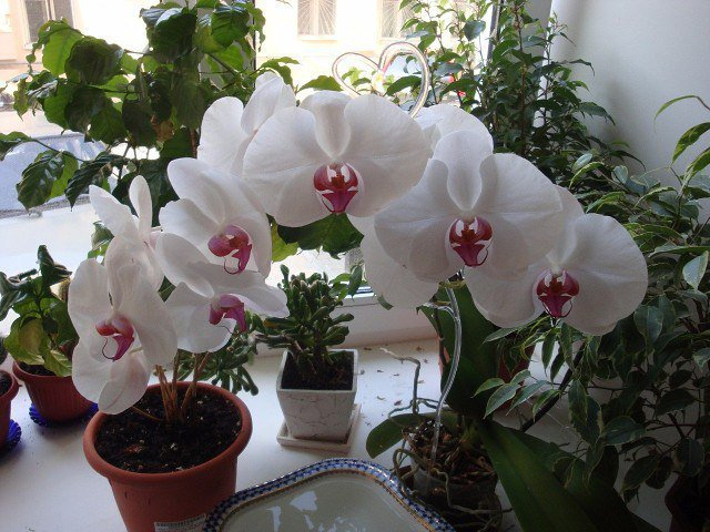 Harmful Effects Of Orchids