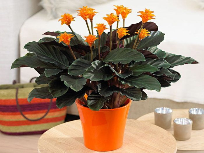 Leafy Indoor Plants With Flowering