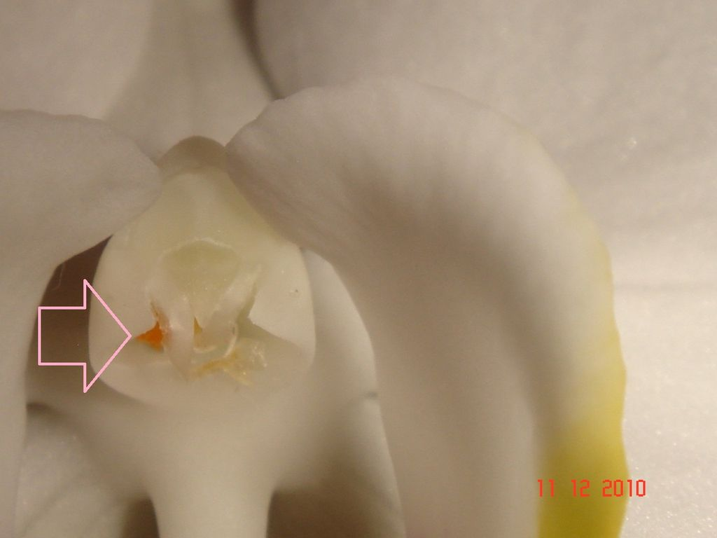Orchid Pollination Methods