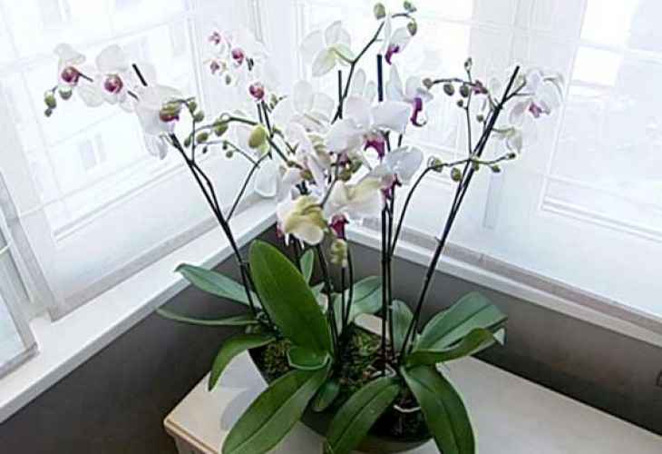 Potting More Orchids In One Pot