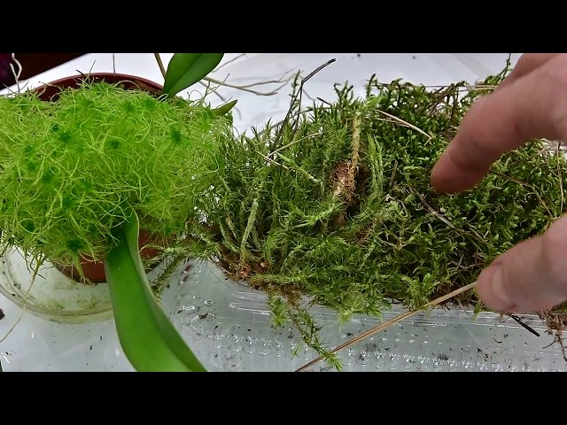 Types Of Moss For Orchids