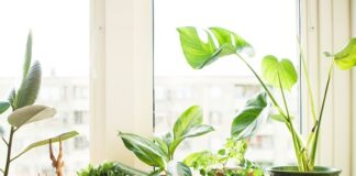 Why Do Indoor Plants Need Direct Sunlight