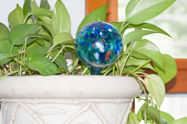 how can i keep my house plants alive while on vacation