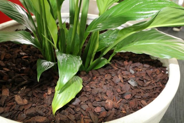 list of decorative mulch for indoor plants