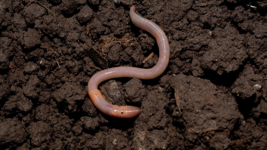 are earthworms good for indoor plants