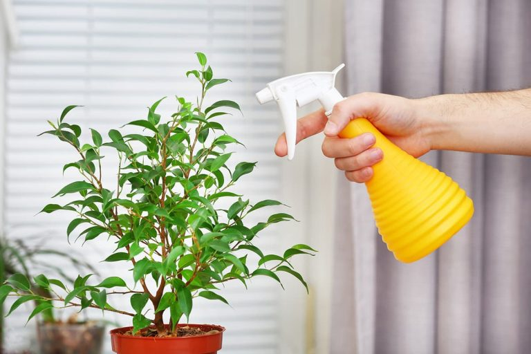how to care for houseplants while on vacation