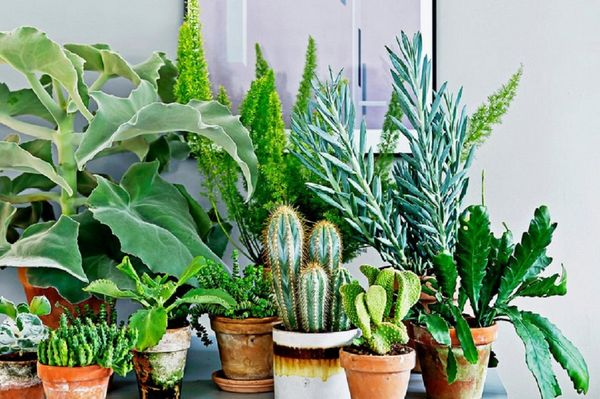 beneficial plants for home