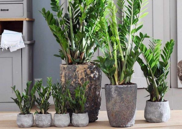 where to put plants in house