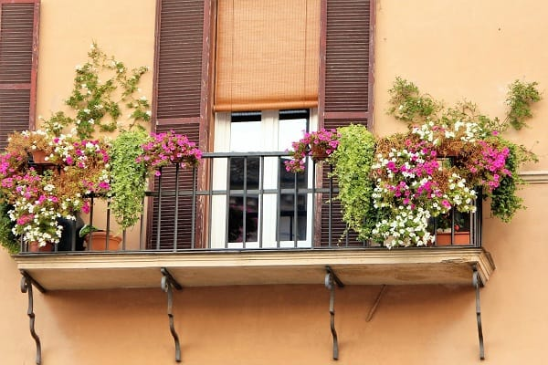 best plants for a sunny balcony