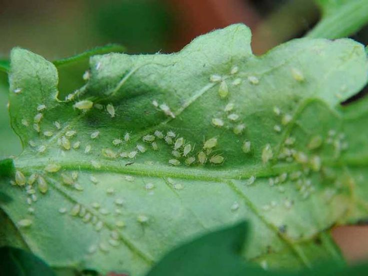 how to prevent pests on indoor plants