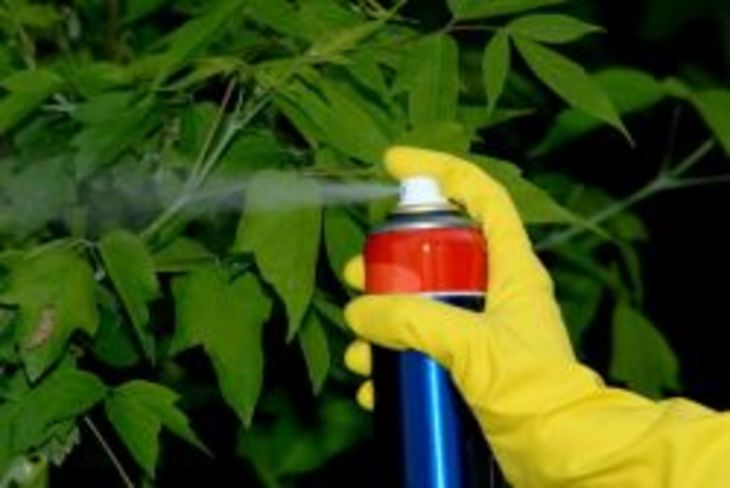 natural insecticides for indoor plants