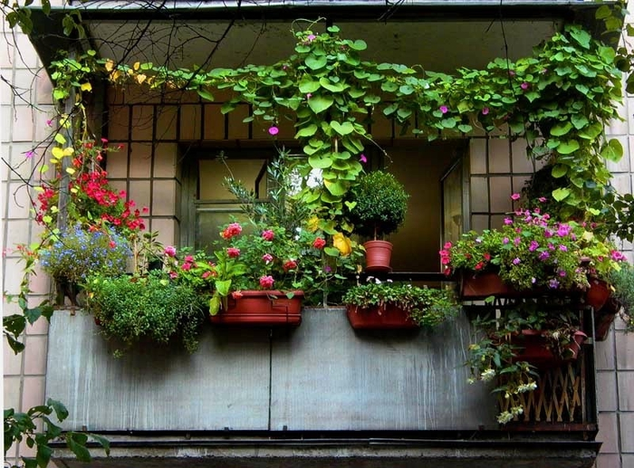 best climbing plants for a sunny balcony