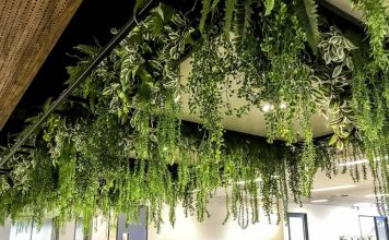 best hanging plants for southern california