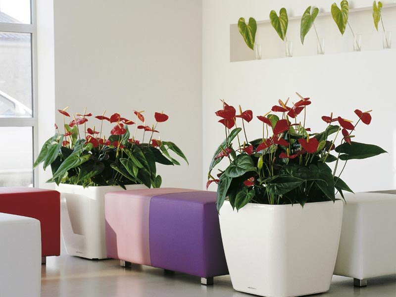 best flowering plants for apartments