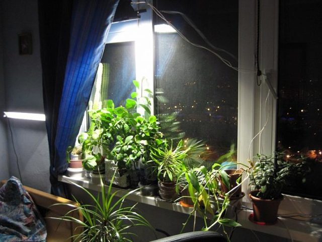 how do you keep plants alive in a dark house