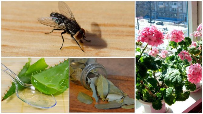 how to attract beneficial bugs for indoor plants