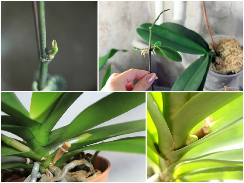 what to do when your orchid has a baby 1