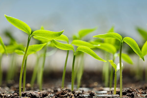 what is the best medicine for plant growth