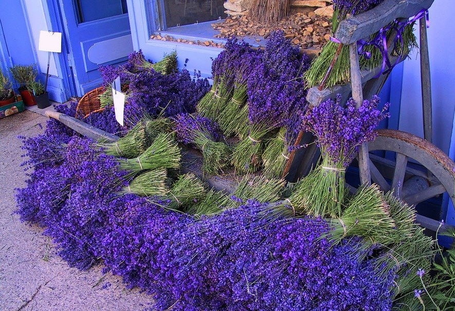 when is the best time to plant lavender