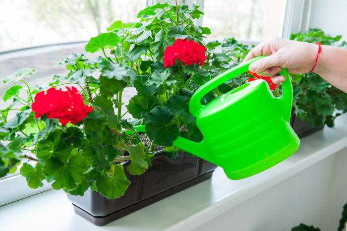 when do you need to feed indoor flowers