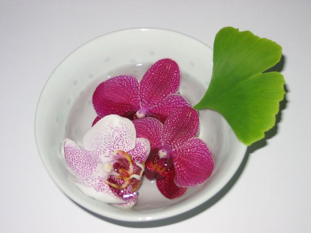which orchid flowers are edible