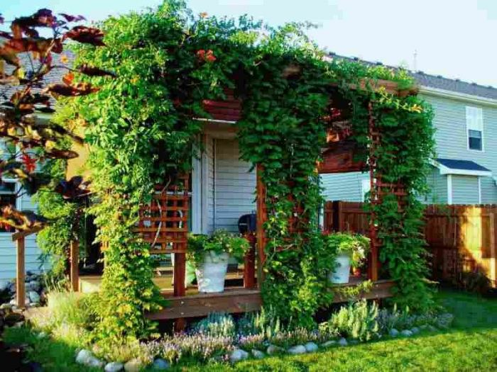 best climbing plants for house walls