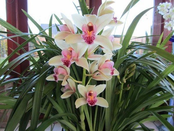 how cold can orchids tolerate