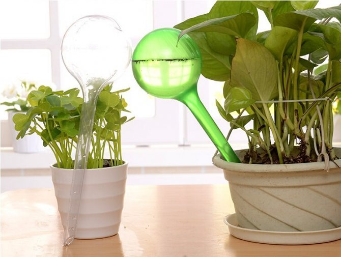 how to prevent indoor plants from leaking water