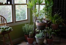 what happens to indoor plants if they are kept in the dark