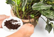 which fertilizer makes plants grow faster